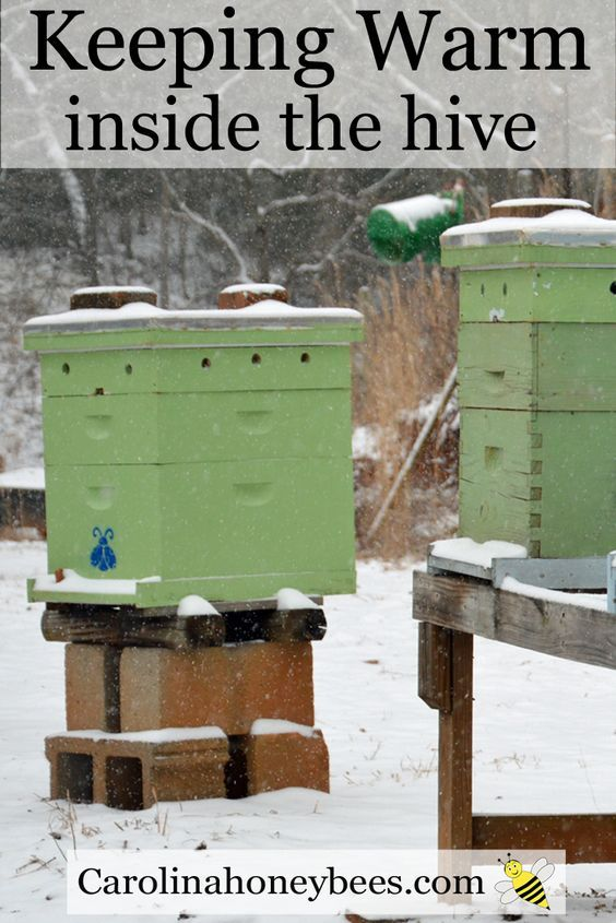Honeybees survive winter by clustering inside the hive. Carolina Honeybees Farm