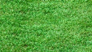 Bermuda Sod Grass