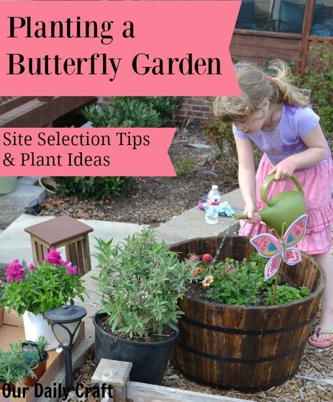 Best 25 butterfly garden plants ideas on pinterest - Butterfly and hummingbird garden designs ...