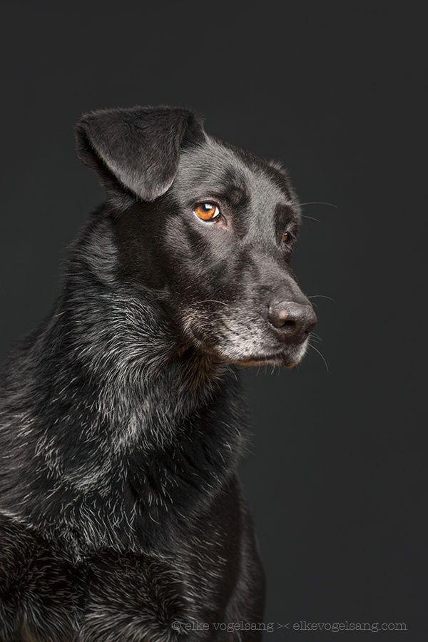 Are you looking at me? by Elke Vogelsang on 500px