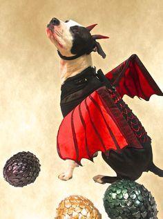 1000+ ideas about Dog Spider Costume on Pinterest | Spider Costume ...