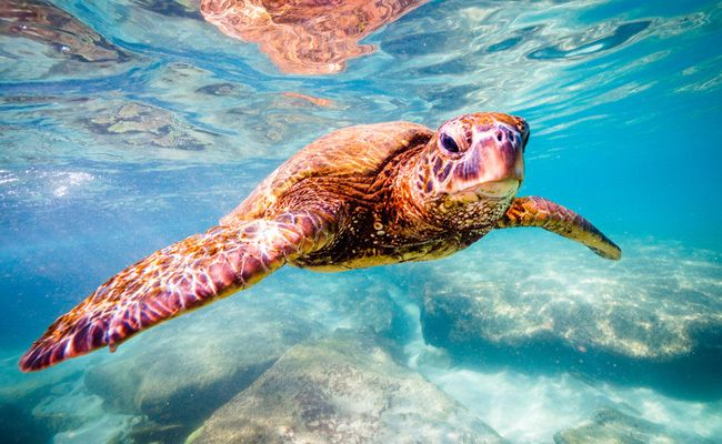 Victory! TripAdvisor Stops Selling Tickets To Cruel Sea Turtle Farm  | Care2 Causes