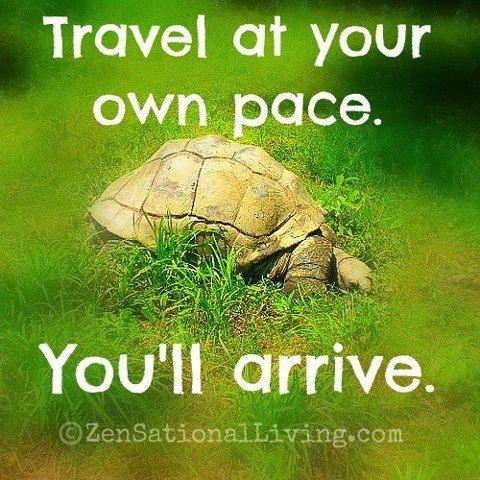 Turtle quote on Travel...                                                                                                                                                                                 Mehr