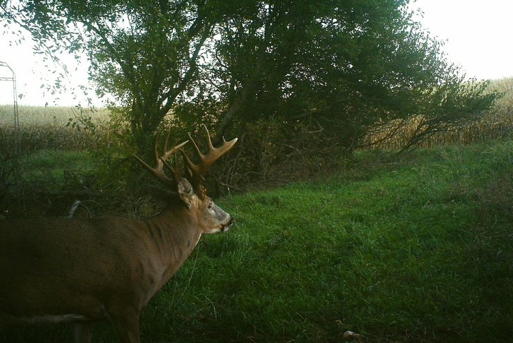 Great deer habitat improvement programs rely on 1 very critical feature: They are hidden. Are yours?