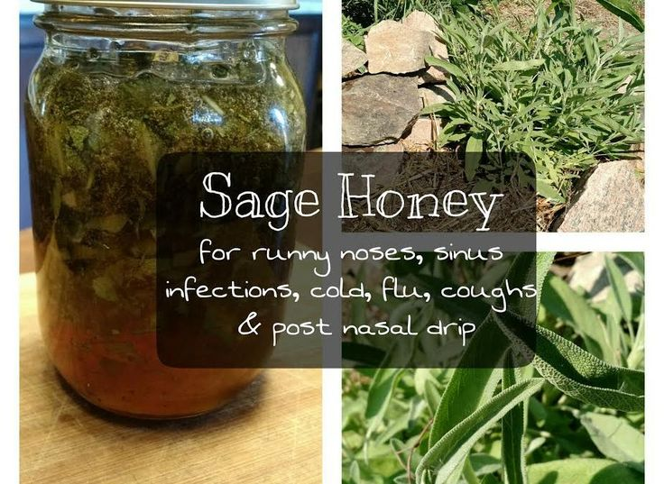 Sage Honey: A DIY Sinus & Runny Nose Remedy