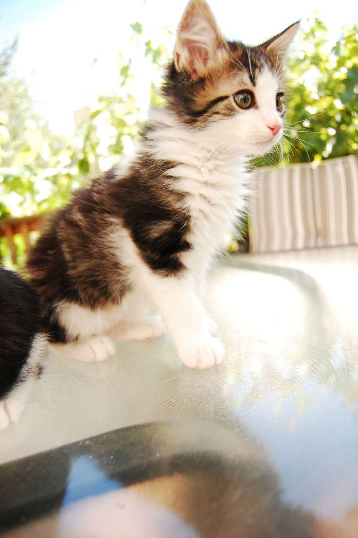 Meet Snoopy Worlds Cutest Cat Take a Quick Break