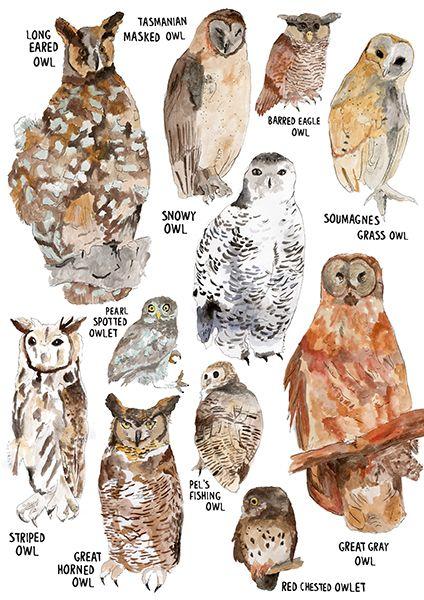 CharisLogia   p r i n t   Pinterest   Owl species, Owl and ...