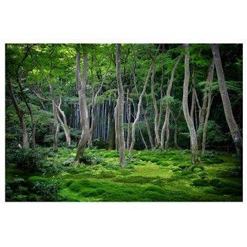 col-forest-photo-wall-mural-Japanischer-Wald-359.jpg (359×359)