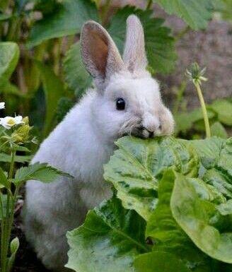 Cute bunny....