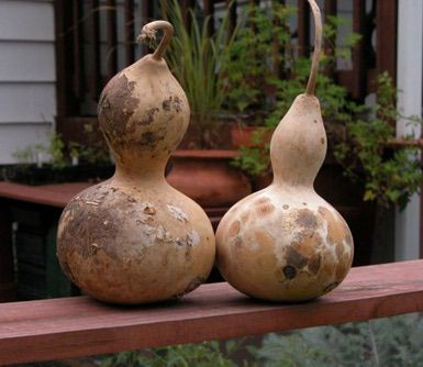 Gourd Bird Houses - Making Birdhouses Out of Birdhouse Gourds - Photo: © Marie Iannotti (2008) licensed to About.com, Inc.