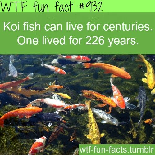 5935 best fun facts images on pinterest 10 interesting for Fun fish facts