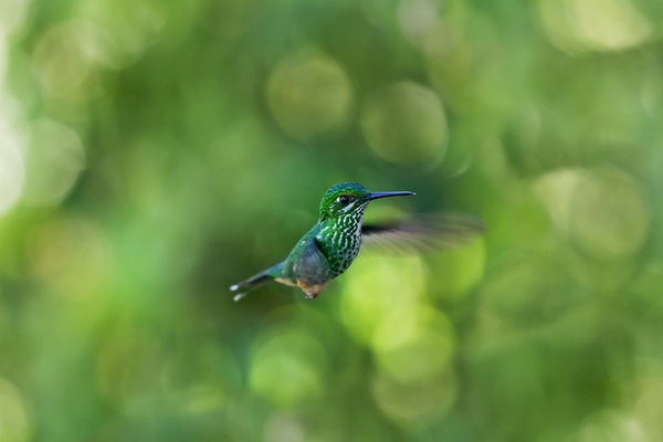 Ecuador I - Hummingbirds by Jan-Frederic Struwe, via Behance