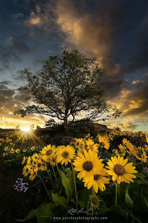 Frühling in Oregon – Fotografie von Rick Parchen – #coolepärchenfotos #hashtag…