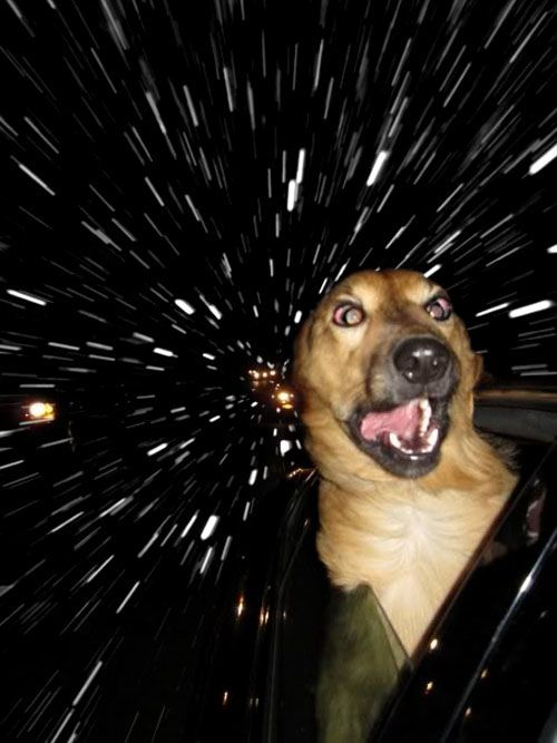"""Dogs In Cars Look Like They're Warping Through Space"" - Or going through the Wonka tunnel."