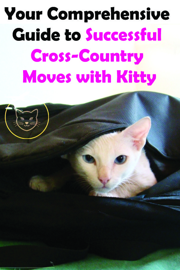 Your Comprehensive Guide To Successful Cross Country Moves With Kitty Moving Cross Country Cats That Dont Shed Cat Travel