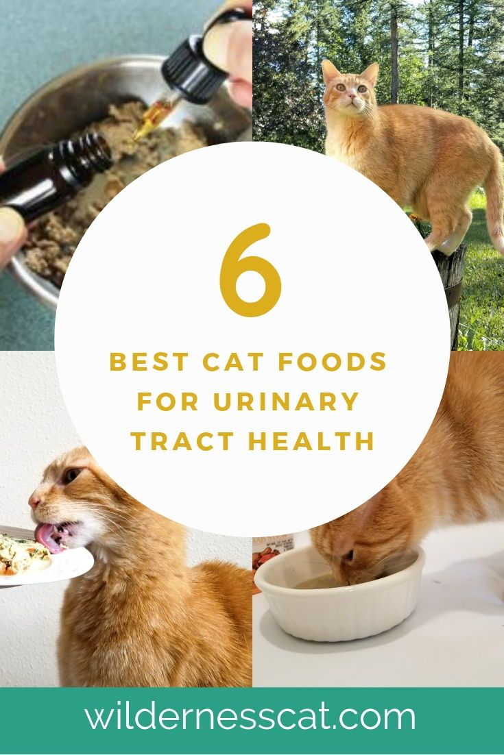 What Is The Best Urinary Cat Food Best Cat Food For Urinary Health 2019 Best Cat Food Urinary Tract Cat Food Cat Nutrition