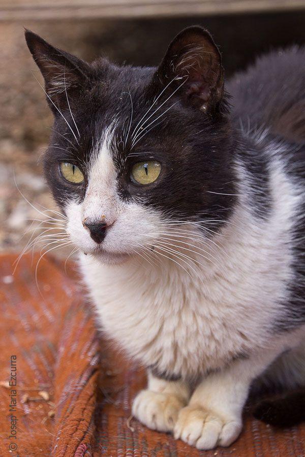 00822-06032016-trifolium gatos bolillas