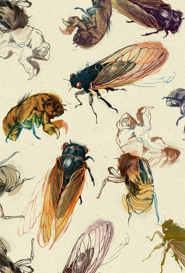 Summer Cicadas  by *teaganwhite on deviantart #traditionalart #art #drawing #artist #bugs #insects
