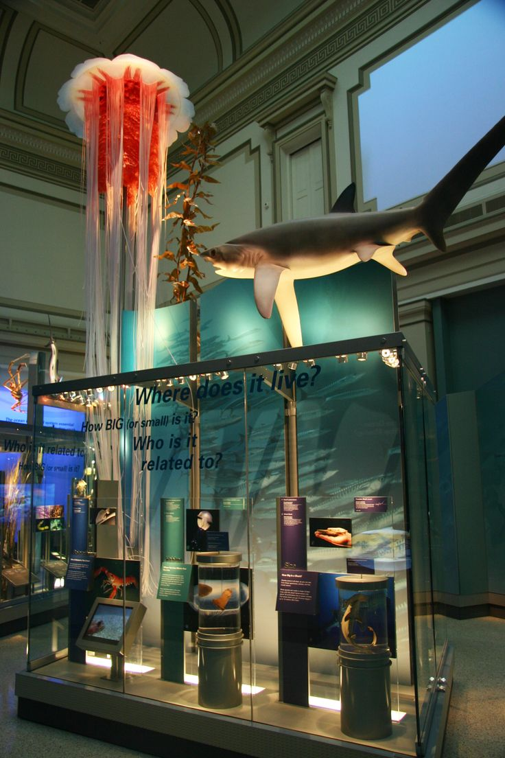 Smithsonian Institution ~ Washington D.C. ~ Sea life is in the Smithsonian Museum of Natural History.