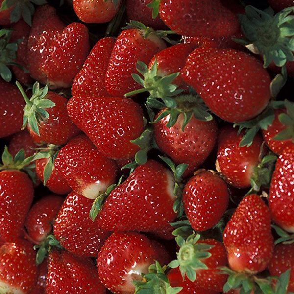 1000 ideas about strawberry plants on pinterest strawberry garden strawberries garden and - Plant strawberries spring ...