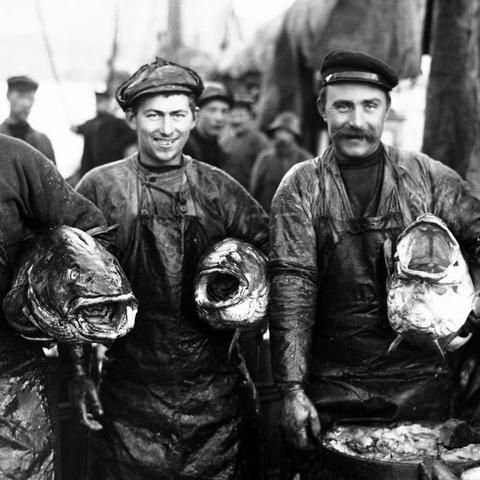 Look at those cod fish heads!! Anders Beer Wilse captured in 1910 the buzzing life of commercial fishing in Lofoten. This was at a time when the small open wooden boats still were used for fishing and the profession was done the traditional way.