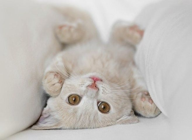 Hello~: Funny Kitty, Pet Products, Kitty Cat, Animal Baby, Adorable Kittens, Baby Animal, Cute Kittens, Baby Cat, White Cat