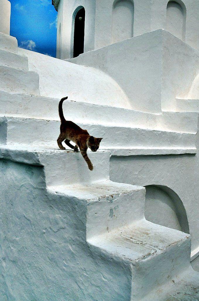 Greek Beauty - Sifnos - Εφταψυχοι ολοι μας σαν  αυτο το γατι - [By Stathis Chionidis]