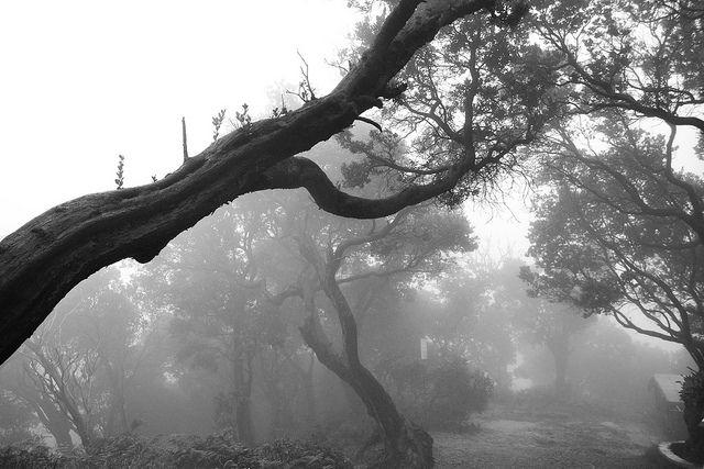 tangkuban perahu dalam kabut | Flickr - Photo Sharing!