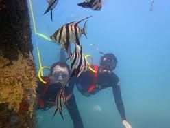 Port Noarlunga reef scuba diving #coastviewwiththemostview