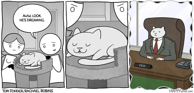The adventures of business cat (900×435)