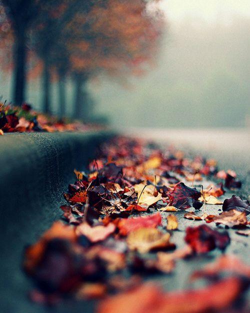 I love the autumn colours
