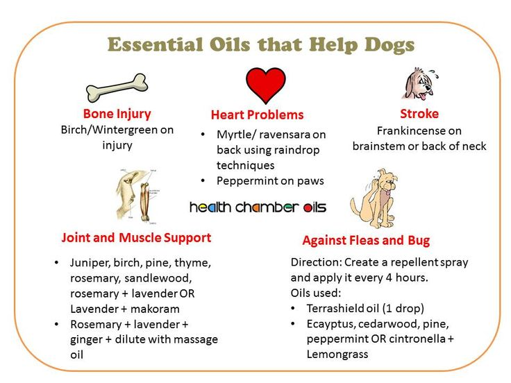 17 best images about doterra and our furry loved ones on pinterest diffusers cats and allergies. Black Bedroom Furniture Sets. Home Design Ideas