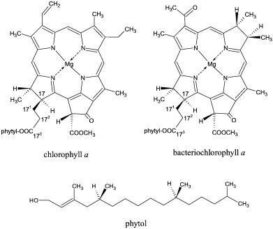 Structural formulae of chlorophyll a and bacteriochlorophyll a, major…