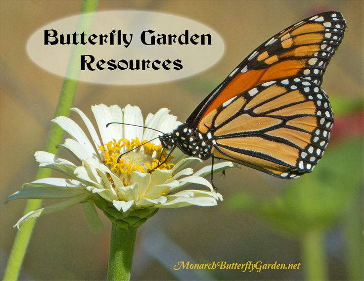 All The Tips, Tools, And Butterfly Garden Resources Youu0027ll Need To Make
