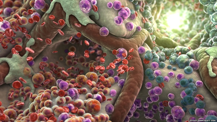 XVIVO visa simplificar ciência e inspirar estudo médico. Cavidade da medula onde podem ser vistas celulas-tronco hematopoieticas.