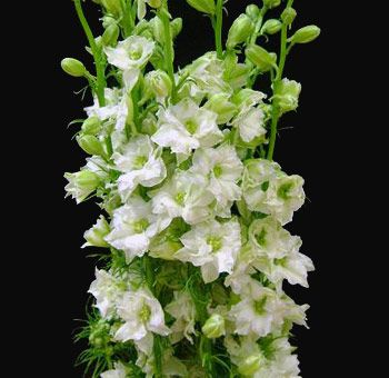Premium wedding flowers from the finest U.S. growers, Wholesale Flowers by the bunch or the case no minimum order. Nationwide to your door delivery. Visit http://www.weddingflowersovernight.com for more details