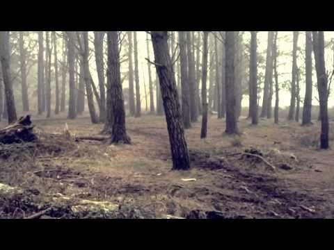 One minute wood and fog - YouTube