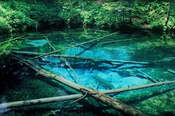 知る人ぞ知る!言葉を失うほどの透明度を誇る池『神の子池』