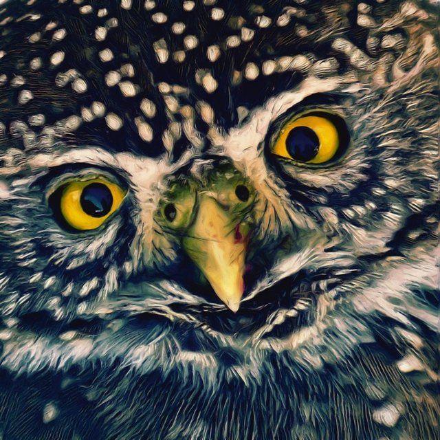 Poster, Leinwandbild »Eulenkopf Tiere Vögel Eule Malerei«