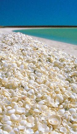 """It covers a 110 km long stretch of coast along the L'Haridon Bight and is one of only two beaches in the world made entirely from shells.It was named """"Shell Beach"""" because of the great abundance of shells of the cockle species (fragum erugatum)."""