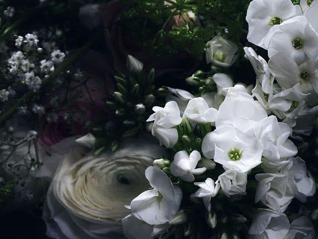 Auf der Mammilade-n-Seite des Lebens   Personal Lifestyle Blog   5 Lieblinge, Weisheiten und Wohneinblicke mit viel Weiß der Woche   Pflanzen- und Kreativ-Workshop von 1000 Gute Gruende bei Blooms in Minden   Ranunkeln weiß  