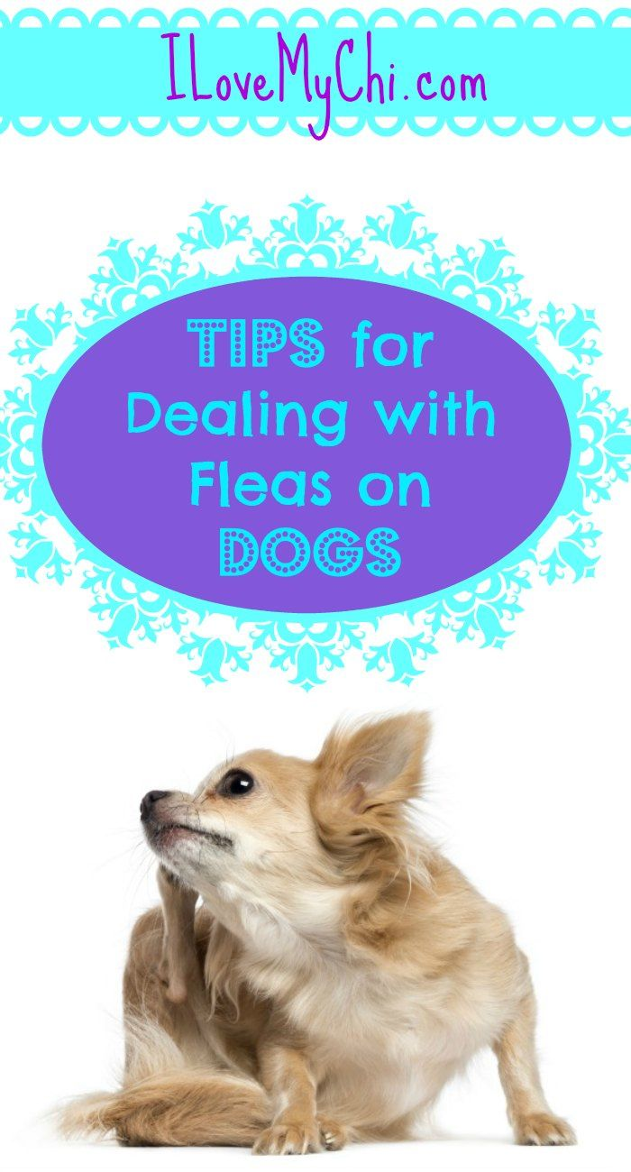 Tips For Dealing With Fleas On Dogs Dog Training Near Me Dog
