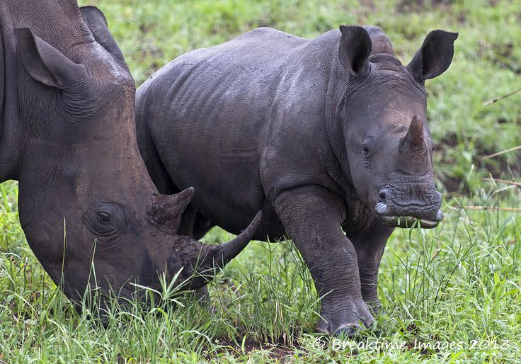 September 22nd marks #WorldRhinoDay.