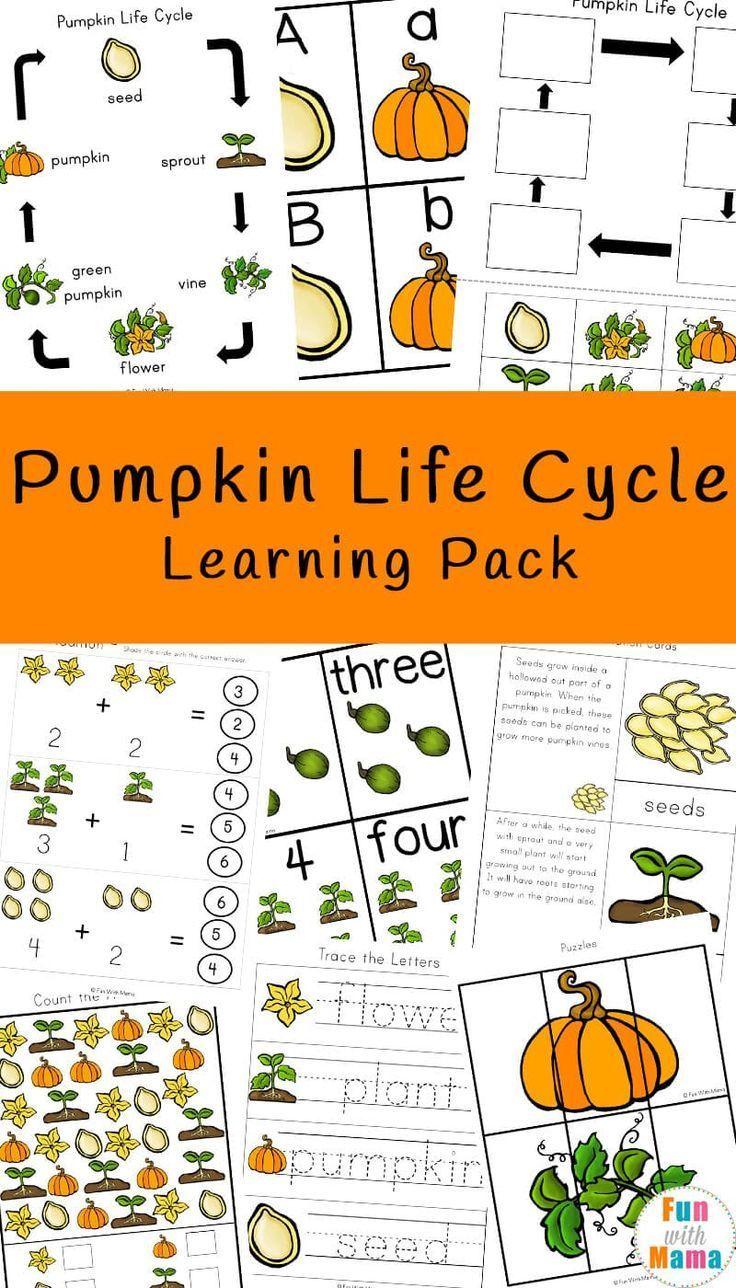Pumpkin Life Cycle Pumpkin Life Cycle Pumpkin Life Cycle Kindergarten Life Cycles Kindergarten [ 1288 x 736 Pixel ]