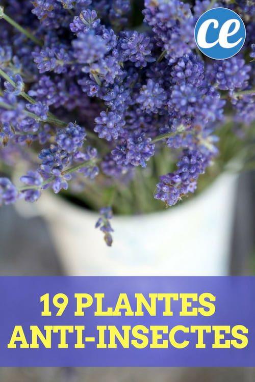 19 Plantes Anti-Insectes Qui Protègent Naturellement Votre Maison & Jardin.