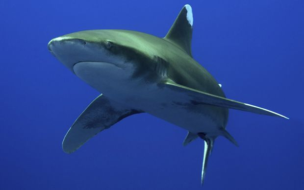 An English tourist has recalled the moment a German woman was mauled to death   by a shark off the coast of Egypt.
