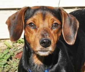 Adopt A Dog Libertyville Il