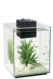 Chi | Lifestyle Home Aquariums | Fluval  .... nice shrimp tank