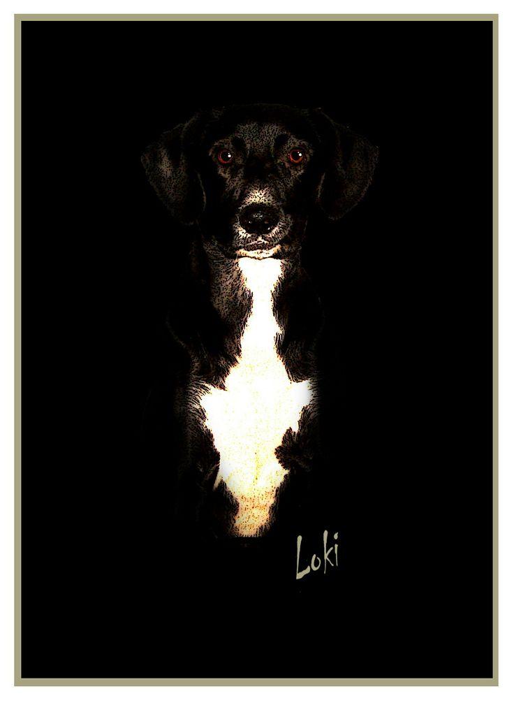 Computer Canines on Etsy. Personalized dog portraits. Black dog on black background £20. www.computercanines@etsy.com