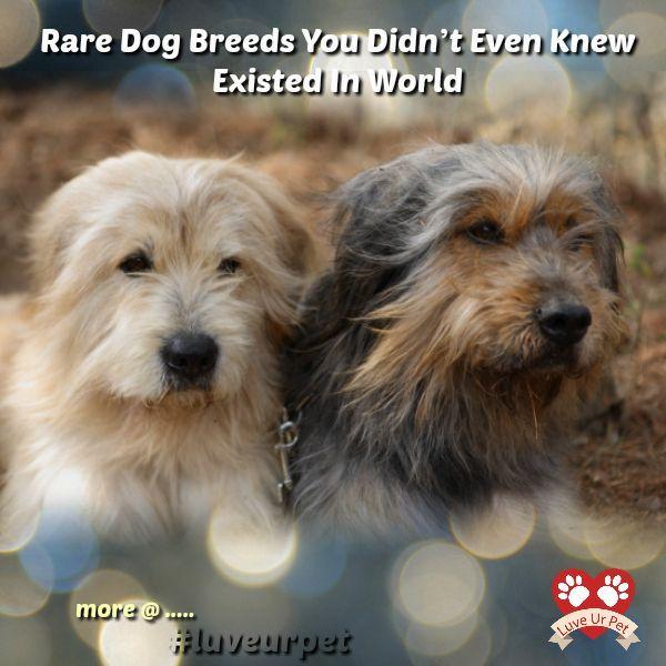 """""""Seltene Hunderassen, von denen Sie nicht einmal wussten, dass sie in der Welt existieren"""" #tiere #tiere # …   – Dog Love Stories"""